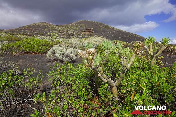 South rift zone landscape, El Hierro Island (Canary Islands) (Photo: Tom Pfeiffer)