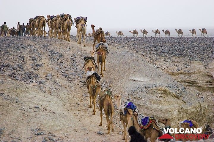 The number of caravans, the number of camels in each caravan, and the names of available salt cutters have all been recorded and matched to each other through a ticket system, supervised by the Shumbahari (the Chief of the Lake). Each caravan is thus assigned a group of 3 salt cutters, which ensures that the size of a single caravan is ideally 10-20 camels.