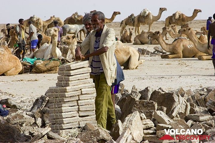 It's loading time. After having paid the 1.50 Bir to the cutters for each block, each camel can carry up to 20 blocks. The blocks are carefully tied together. (Photo: Tom Pfeiffer)