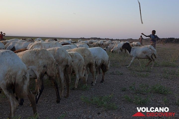 Boy herding sheep in the Danakil desert (Photo: Tom Pfeiffer)