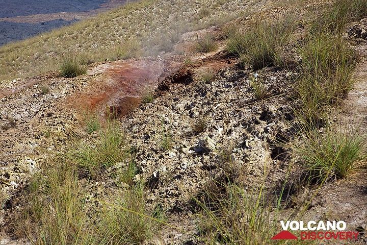 Thanks to humid fumaroles, grass is growing in this area on the caldera rim (Photo: Tom Pfeiffer)