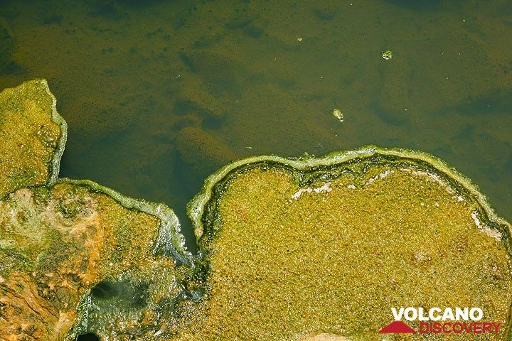 Green and yellow algea at hot springs of Polichnitos, Lesbos Island (Greece) (Photo: Tom Pfeiffer)