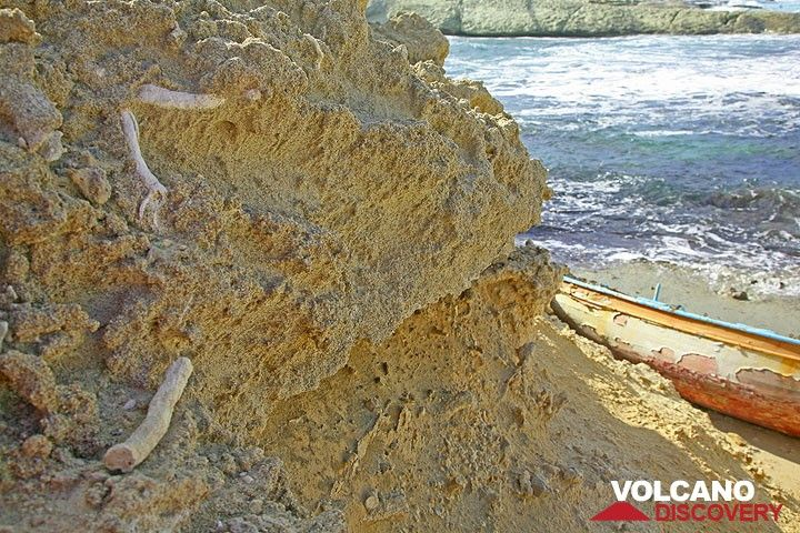 Calcified fossile roots and branches (Photo: Tom Pfeiffer)