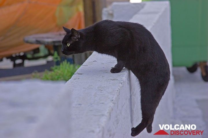 Schwarze Katze in Mandraki (Nisyros) (Photo: Tom Pfeiffer)