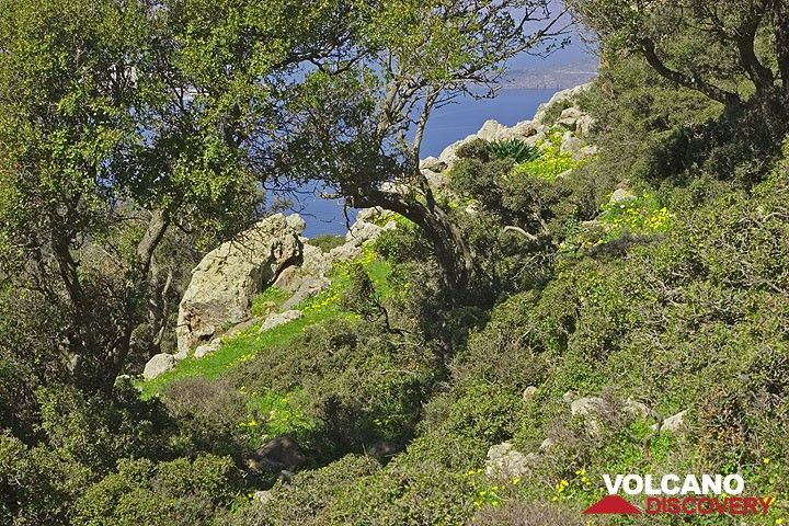 Trees on the upper slope of Profitis Ilias mountain. (c)