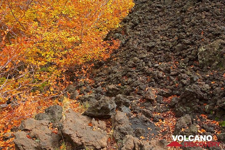 Black lava and autumn colors (Photo: Tom Pfeiffer)