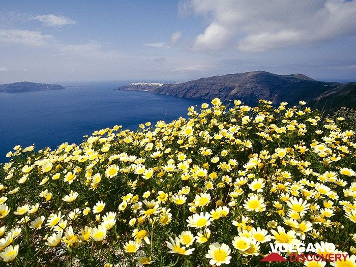 Spring on Santorini (Photo: Tobias Schorr)