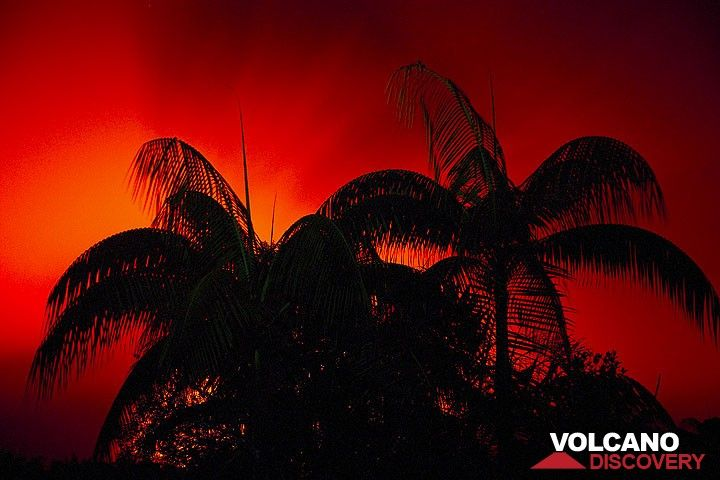 Silhouette of palms in front of the red illuminated sky above Ambrym volcano (Photo: Tom Pfeiffer)